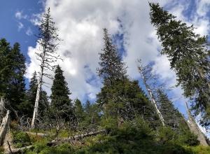 Babia Góra (sierpień 2019)